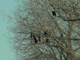 eaglegroup.jpg