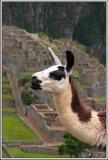 Viaje a Peru - Peru tour