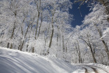 Winter Mountain Road: Mountain Lake, Giles County