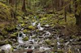 Stream Near Sol Duc