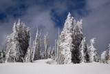 Fresh Snow On Hurricane Ridge