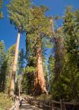 Sequoia and Kings Canyon- Just Passing Through