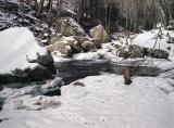 Winter Stream: Cascades, Giles County