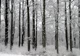 Early Morning Snow-Blacksburg