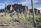 Leaning Saguaros