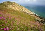 Wild Flowers At Point Reyes