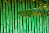 Banana & Bamboo