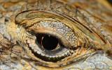 100% crop of the eye D800E
