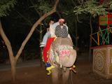 Choki Dandi - Elephant ride