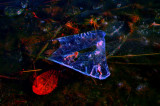 MSI_DSC3057bwb_RGB1ke.jpg