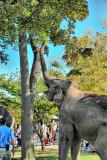 Afternoons at the Buffalo Zoo