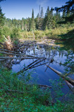 2T1U6027.jpg - Algonquin Provincial Park, ON, Canada