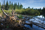 2T1U6031.jpg - Algonquin Provincial Park, ON, Canada