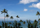 View thru palm trees