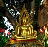 Buddha image under a tree