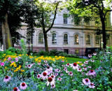 Tweed Courthouse with flowers