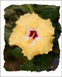 Freds Flower
