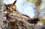 At rest in the nest.