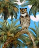 Great-Horned-Owl, Male