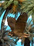 Great-Horned-Owl-in-flight.