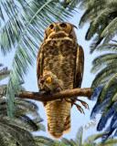 Owl with Heron