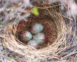 photos de nids