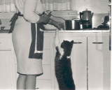 Wilfrid last picture in kitchen stretching for food.jpg