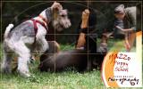 Yazoo Puppy and Dog training school