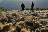 Récolte de quinoa au Pérou ? Non, de lentilles sur l'île de la Réunion !
