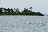 Découverte de l'île aux Oiseaux située au milieu du Bassin d'Arcachon