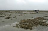 Découverte de la baie de Somme avec un guide naturaliste