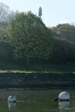 Sur le golfe du Morbihan en semi-rigide - MK3_9344 DxO Pbase.jpg