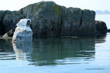 Sur le golfe du Morbihan en semi-rigide - MK3_9397 DxO Pbase.jpg