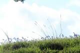 Sur le golfe du Morbihan en semi-rigide - MK3_9469 DxO Pbase.jpg