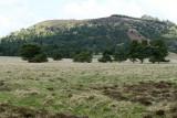 Auvergne - Randonnée sur le puy des Gouttes