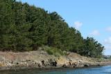 Sur le golfe du Morbihan en semi-rigide - MK3_9590 DxO Pbase.jpg