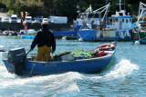 Sur le golfe du Morbihan en semi-rigide - MK3_9638 DxO Pbase.jpg