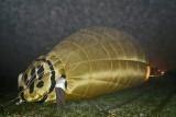 2502 Lorraine Mondial Air Ballons 2009 - MK3_5142_DxO  web.jpg