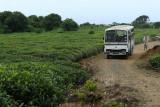2 weeks on Mauritius island in march 2010 - 1802MK3_0999_DxO WEB.jpg