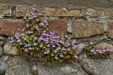 Plantes opportunistes - Opportunist plants