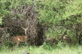 Départ de la réserve d'Amboséli vers celle de Tsavo Ouest