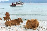 2 semaines de vacances en Corse - 2 weeks in Corsica