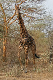 Sénégal - Visite en 4x4 de la réserve animalière de Bandia