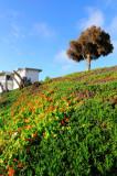 Morro Bay Hillside