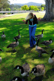 Super Friendly Geese