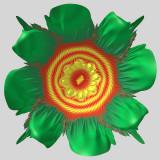 Douadys flower