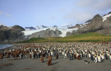 The King Penguin breeding colony at Gold Harbour
