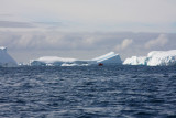 A collection of grounded icebergs