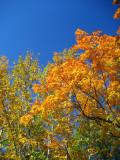 Hawk Ridge leaves
