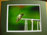 Ruby-throated Hummingbird (matted print)